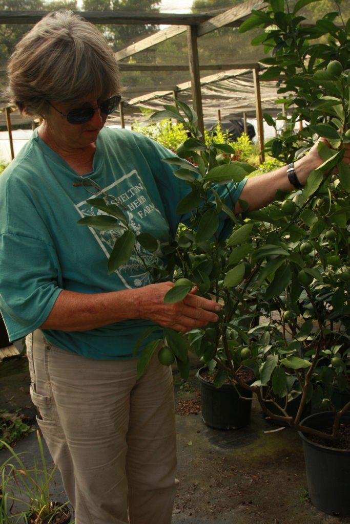 Shelton Herb Farms Brunswick County