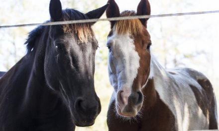 At Wonderland Farm in Leland, Karen Mealey shares her love of horses