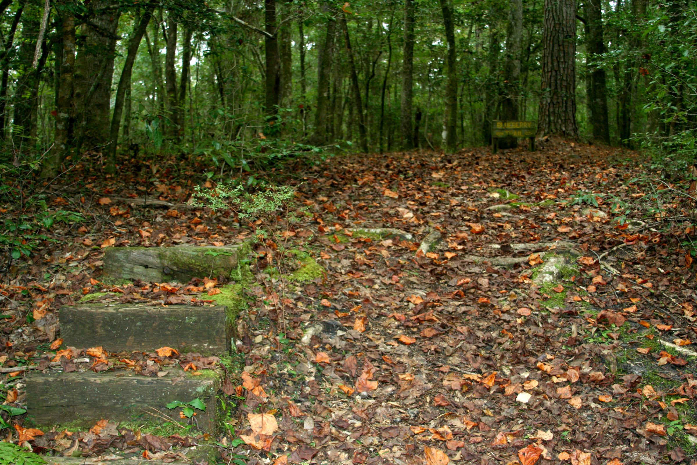 Ev Henwood Park, Leland NC