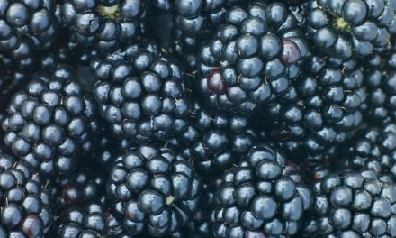 The Blackberry: Summer's Sweet Antioxidant