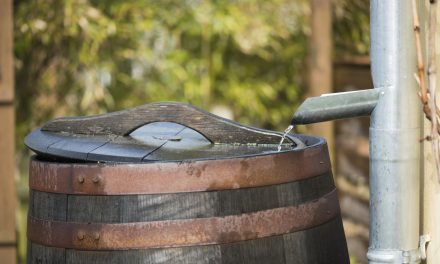 Green Water: A Look at Rain Barrels