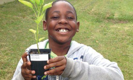 Lincoln Elementary School Garden Project