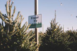 NC Christmas Trees in Leland