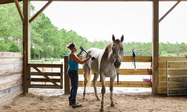 Healing with Horses at Horseplay Farms
