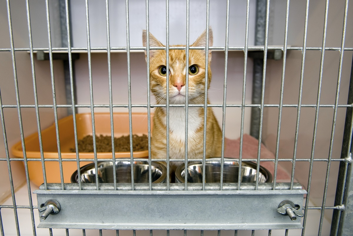 Where to Adopt a Pet in Brunswick County