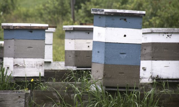 Beekeeping in Brunswick County Grows in Importance