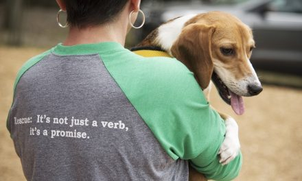 How's Howie: The Handicapped Beagle's Touching Story