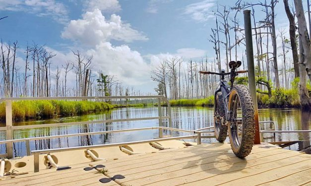 Cape Fear SORBA Expands the Trails at Brunswick Nature Park