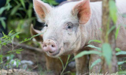 The Farm at Juniper Bay Brings a Whole New Life