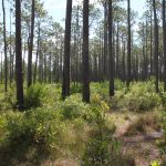 Green Swamp Preserve Offers Unique Nature Opportunity