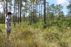 Green Swamp Nature Preserve Brunswick County (1)