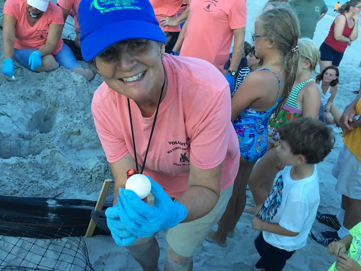 Ocean Isle Beach Sea Turtle Protection