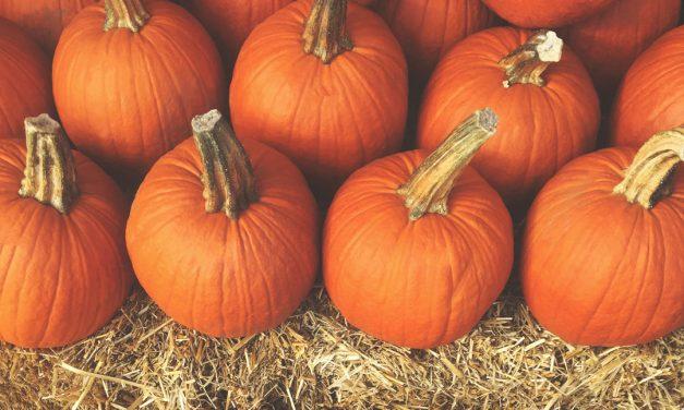It's Spooky Season! Halloween Happenings