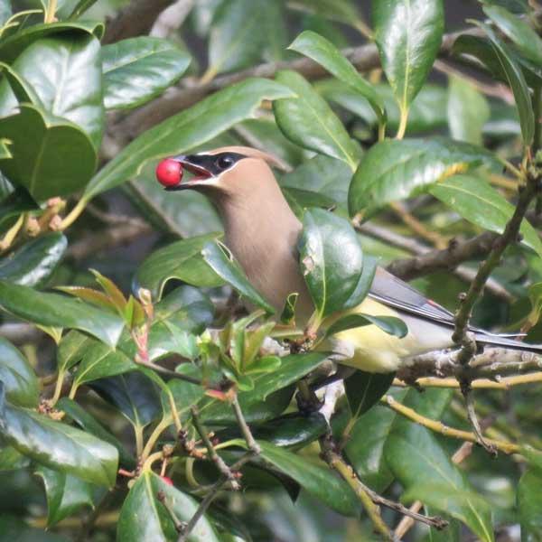 BirdsinBrunswickCountyNC