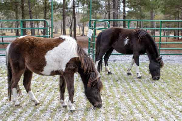 HorsesWildPreserve