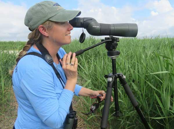 Jill Peleuses Wild Bird Garden NC