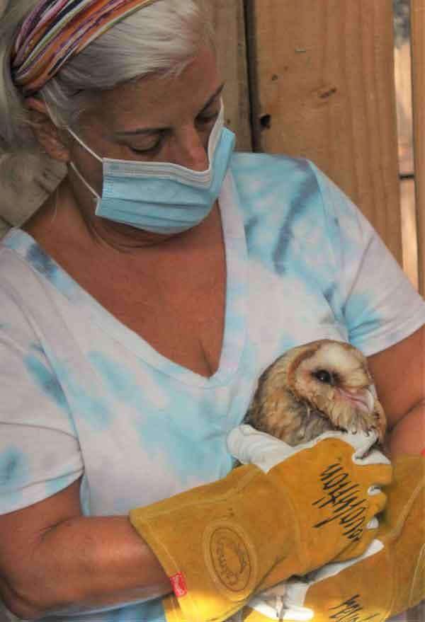 Oak Island NC Wildlife Shelter
