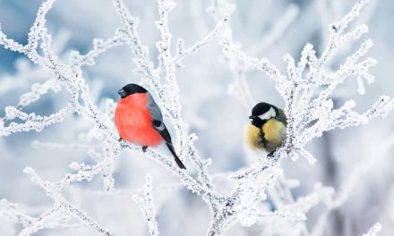 Learn About the Great Backyard Bird Count