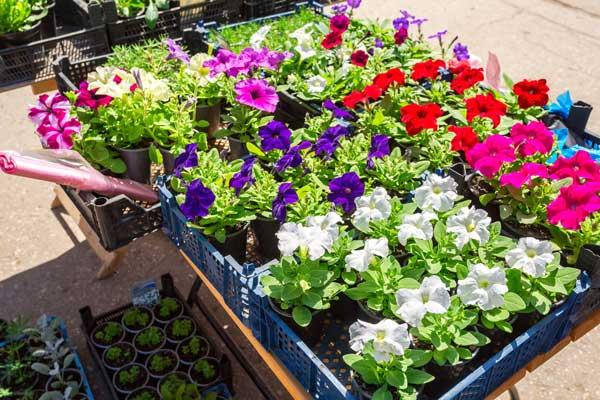 Plant Sale Spring