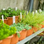 It's Time for Spring Planting