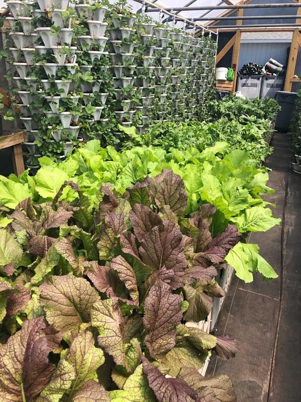 Pure Market Plants NC